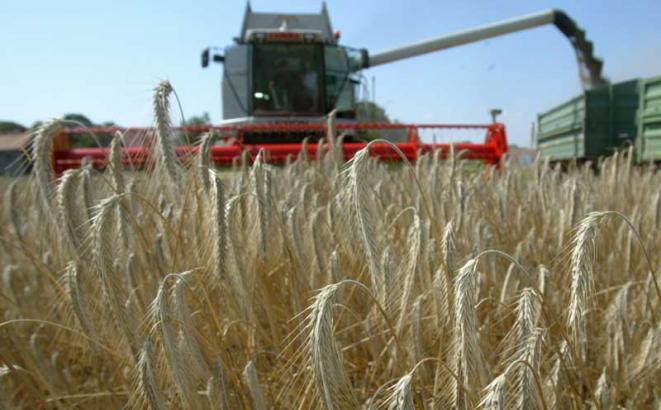 Prva prihrana strnih žita za desetak dana