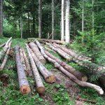 Proizvođači namještaja iščekuju donošenje novog zakona o šumama u FBiH