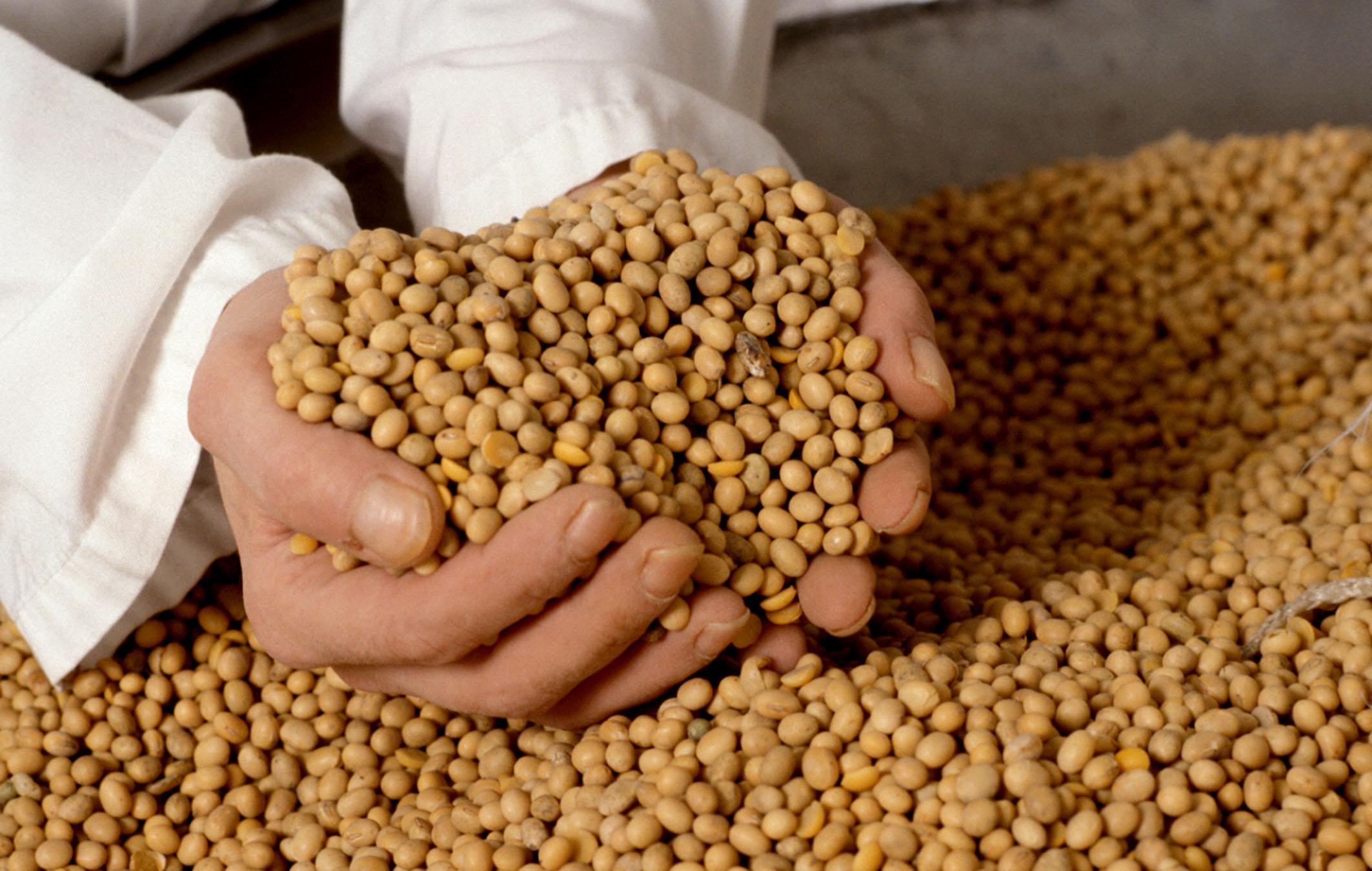 Novi cjenovni rekord zrna soje