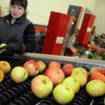 Tone voća čekaju u hladnjačama
