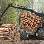 Prošlogodišnja proizvodnja šumskih sortimenata manja za 4,83 odsto