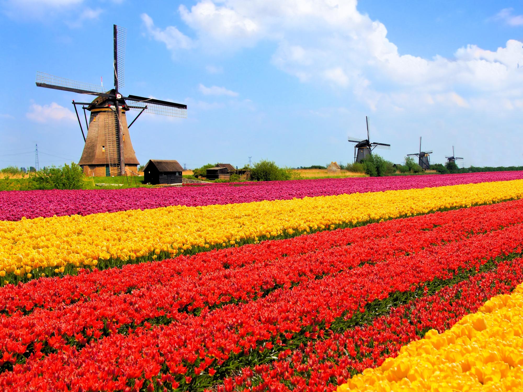 Kako je uspjela zemlja tulipana?
