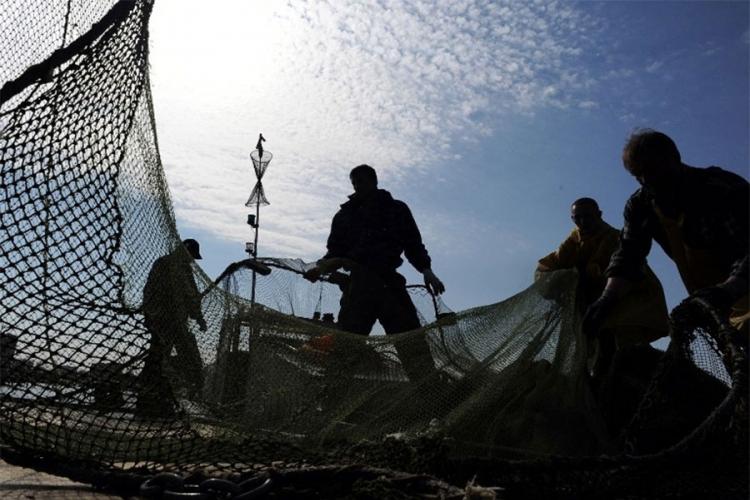proizvedeno 3.700 tona ribe u BiH, a kapacitet 13.000 tona