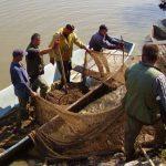 Izvoz ribe u EU trenutno nije moguć bez plaćanja carine