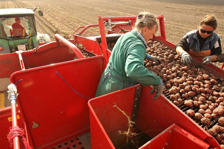 """Rusija proizvela hranu za četiri milijarde dolara kada je rekla """"njet"""" Zapadu"""