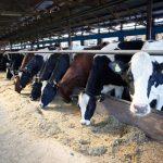"""Novi kupci u """"Farmlandu"""" do 15. marta"""