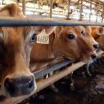 U Rogatici danas regionalna poljoprivredna izložba i sajam stoke