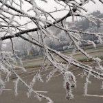 Mraz ubio jabuku, krušku, trešnju…