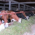 Dok izvoz stoji, farmerima dogorijeva do nokata