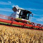 Prinos i kvalitet pšenice prosječan