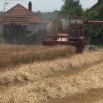 Počeo otkup pšenice, mlinari nude manje nego prošle godine