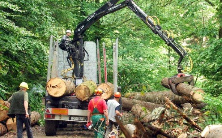 Prosječne plate radnika u preradi drveta i proizvodnji namještaja tek 550 KM