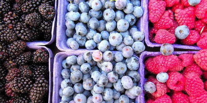 USAID/Sweden FARMA II nastavlja podršku proizvođačima jagodastog voća širom BiH