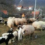 Suše, požari i mraz uništili poljoprivredni i stočarski sektor