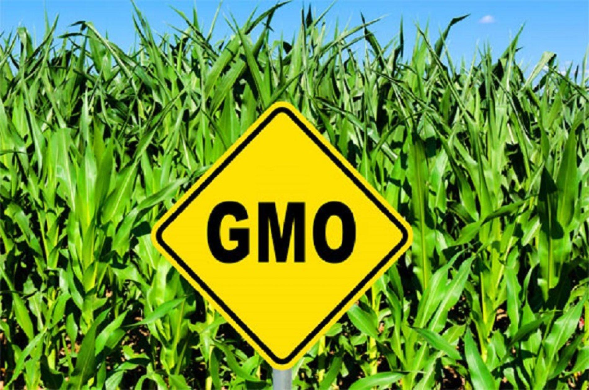 Uskoro na policama hrane u BiH oznaka proizvoda koji ne sadrže GMO