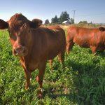 U 2016. zasijano 530.000 hektara zemljišta, žitarice imaju najveći udio
