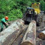 Šume RS ostvarile dobit od 3,7 miliona KM