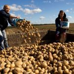 Krompir iz BiH preskup za EU