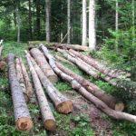 """Polugodišnja dobit """"Šuma Srpske"""" 2,7 miliona KM"""