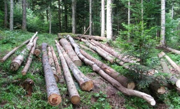 Smanjena proizvodnja i prodaja šumskih sortimenata