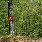 Pod minama šumsko bogatstvo vrijedno 800 miliona KM