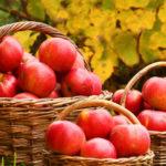 Rusija zabranila uvoz jabuka iz BiH