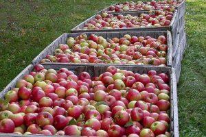 Nastavak izvoza jabuka u Rusiju upitan, RS blokira proces rješavanja spora