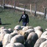 FBiH: Poljoprivrednici pozvali Vladu da usvoji program podsticaja