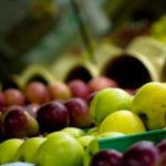 Šarović uskoro u Moskvi na pregovorima u vezi s izvozom jabuka