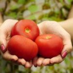 Prisjeo im paradajz iz Turske