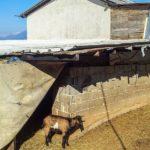 Poljoprivredni podsticaji za lažne kvadrate: Vještak objekte procjenjivao u kafanama