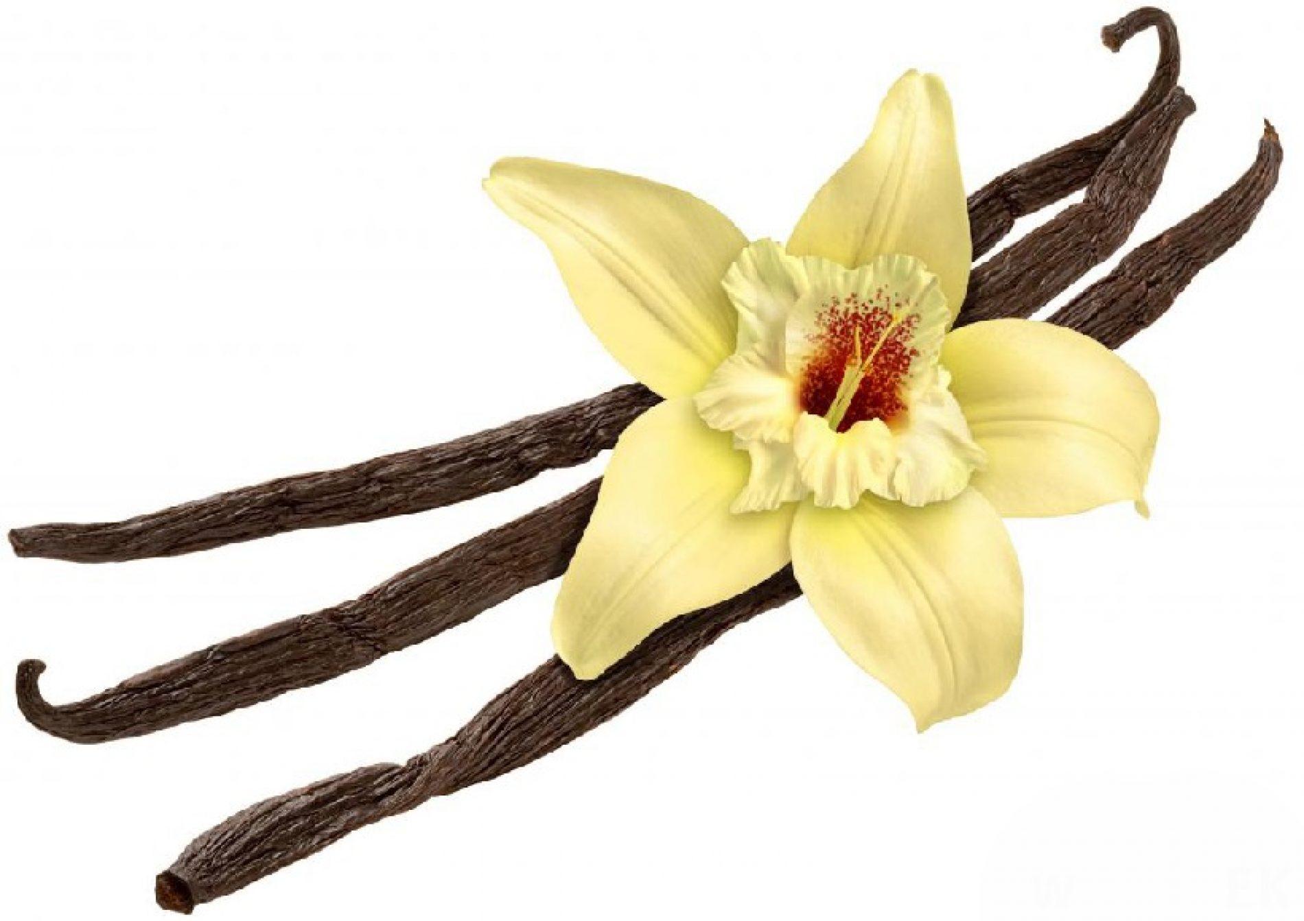 Vanilija podiže cijene slatkiša?