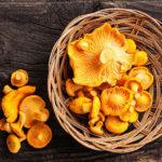 Proizvodnja gljiva teška 400 tona