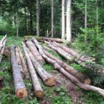 Upućena urgencija za razmatranje zakona o šumama FBiH