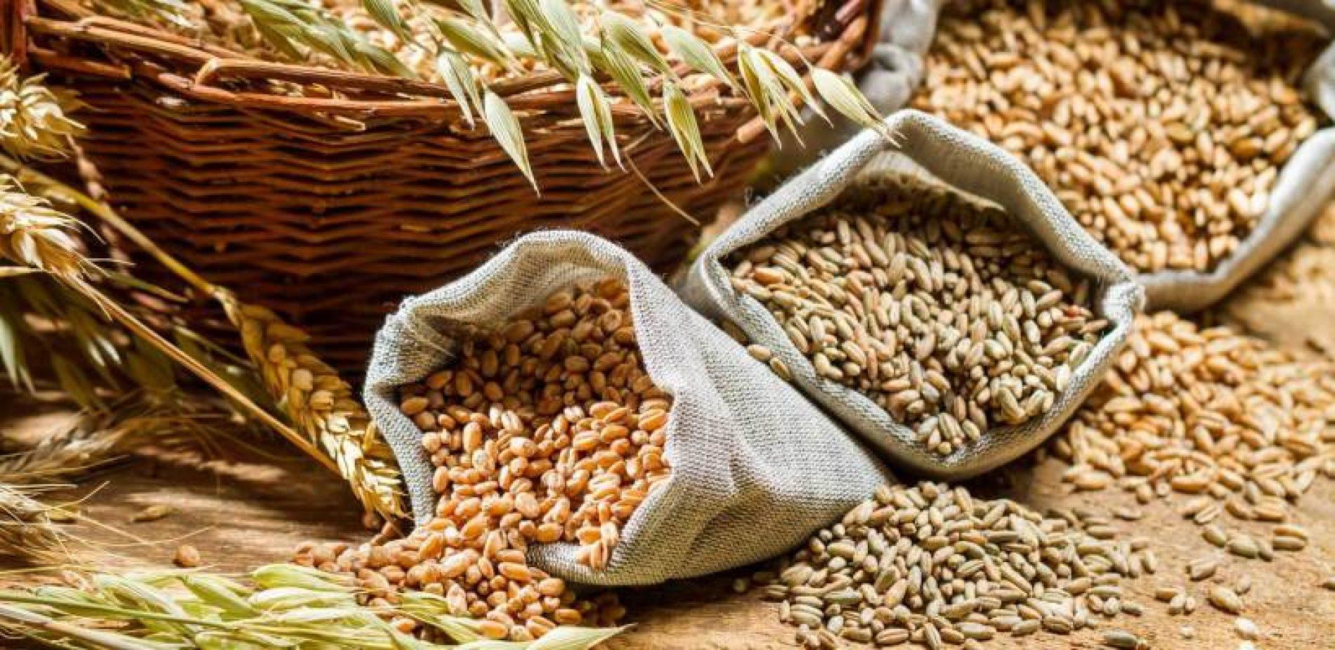 Poljska: Moguć rast cijena žita za hljeb