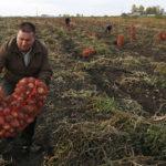 BiH prijeti nestašica krompira