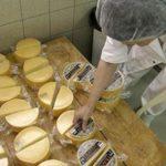 Mljekara Livno uskoro počinje izvoz u Rusiju