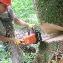 šume radnik