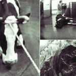 Afera sa bolesnom stokom: U BiH uvezeno šest hiljada tona mesa iz Poljske!