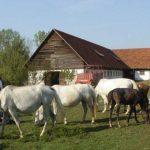 """Ministarstvo: Uzrok gubitka """"Vučijaka"""" pad cijena konja"""