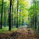 Kampanja 'Šuma je više od drveća!' u Sarajevu