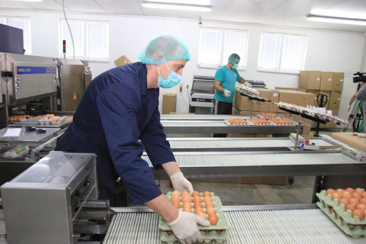 Peradari iz BiH se pripremaju za izvoz jaja za preradu u EU