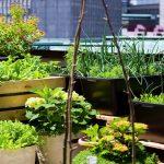 Veliki interes građana opštine Novi Grad za urbanu poljoprivrednu proizvodnju