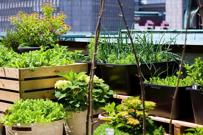 TIKA prezentovala sistem i način uzgoja povrća na balkonima za građane Zenice