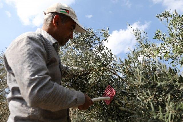 I s njima zaratio: Tramp uništava španske uzgajivače maslina