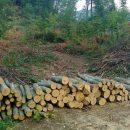 krađe šume