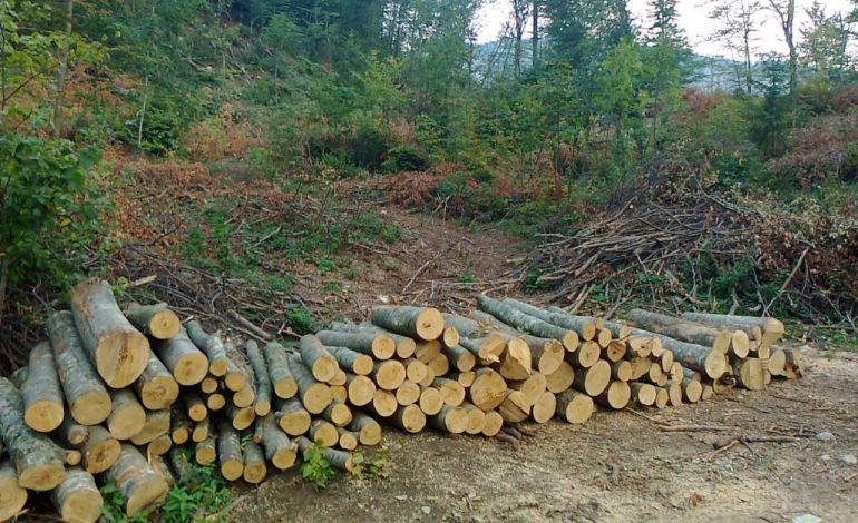 Ukupna proizvodnja šumskih sortimenata manja za 1,14 odsto