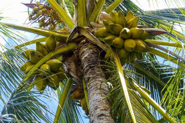 U BiH iz Indonezije stiže briket od kokosove ljuske