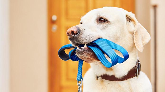 Jalov apel veterinara protiv besplatne sterilizacije
