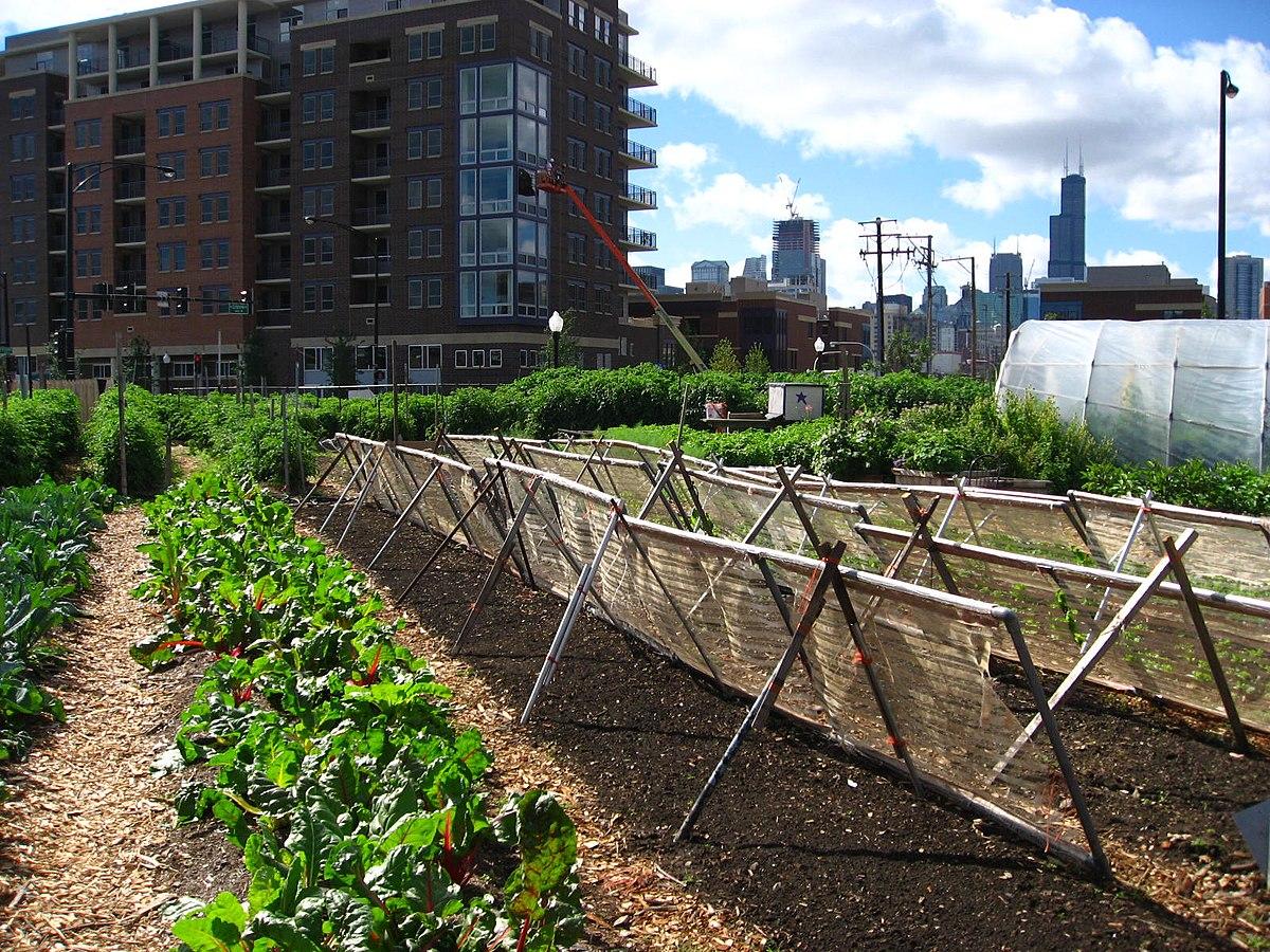 urbana poljoprivreda